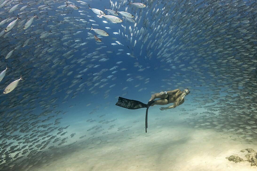 'Atravesando el cardumen de Akule'. Foto tomada buceando en la Bahía de...