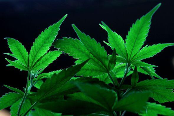 La garra de la  droga llegó hasta el corazón del Bosque Nacional Sam Hou...