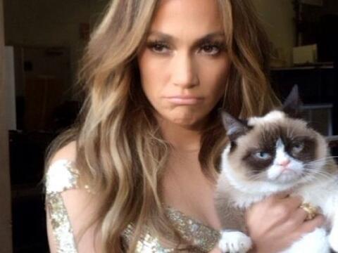 El rostro felino consentido de las redes sociales está por entrar...