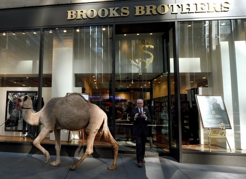 Unos más grandes, otros más menuditos, pero fueron varios los camellos q...