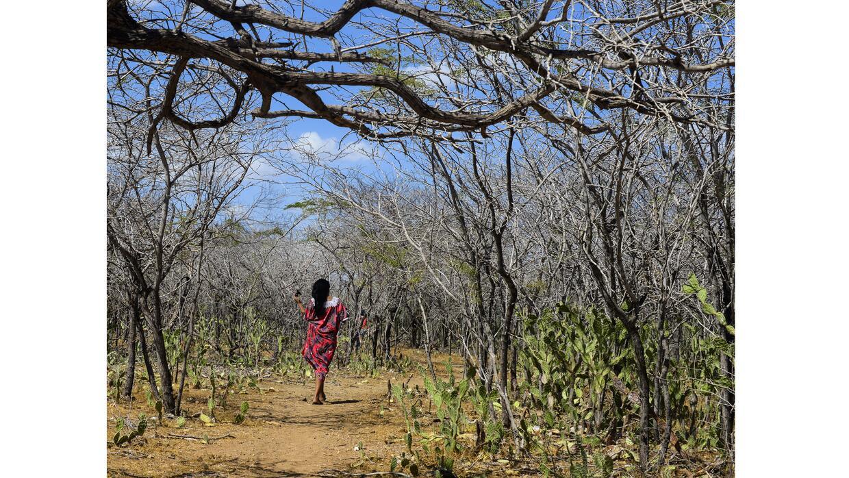 A Wayuú woman walks along the parched landscape. Climate models predict...