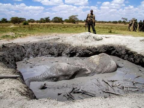 Un joven elefante sufrió un momento de pánico al caer en u...