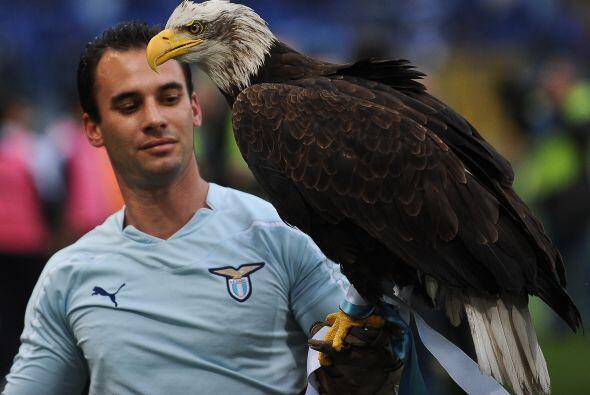 Y para todos los fanáticos de las Aguilas... pero no del América, sino d...