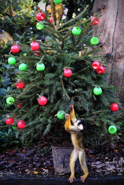 El espíritu navideño le llegó a todos, inclusive estos animales están di...