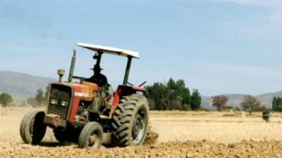 Sequía obligó a Rusia a suspender sus exportaciones de trigo de la cosec...