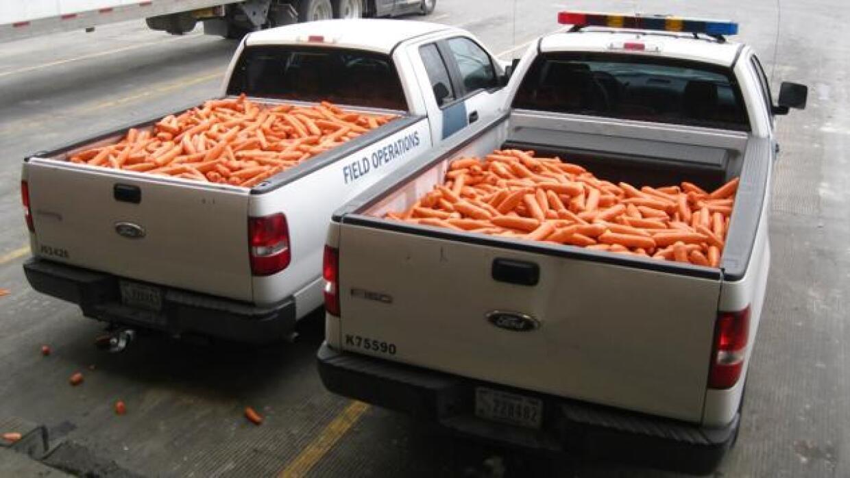 Cargamentos de zanahorias camuflando la marihuana.