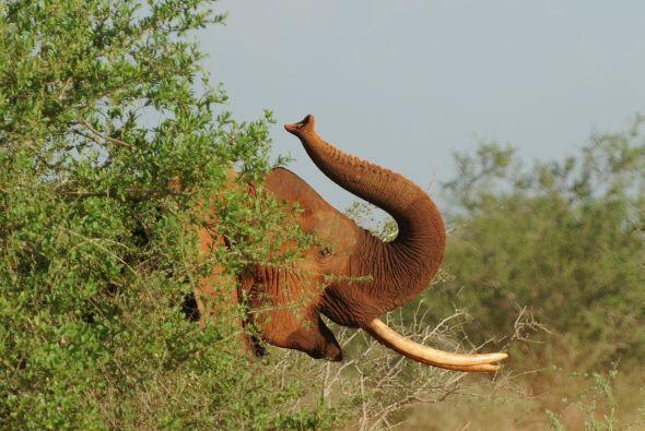 La organización en pro de esta especie tiene como objetivo combatir la c...