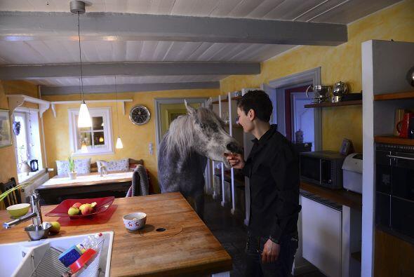 Esta es la mujer que vive con el enorme caballo árabe en su hogar y lo c...