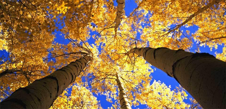 Estos son los 10 parques nacionales más visitados de Estados Unidos  ro...