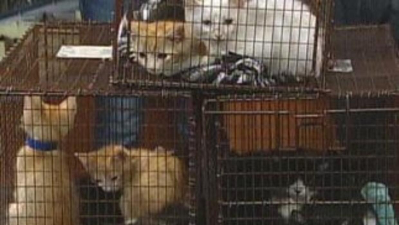 Los cadáveres de los gatitos fueron encontrados por investigadores cuand...