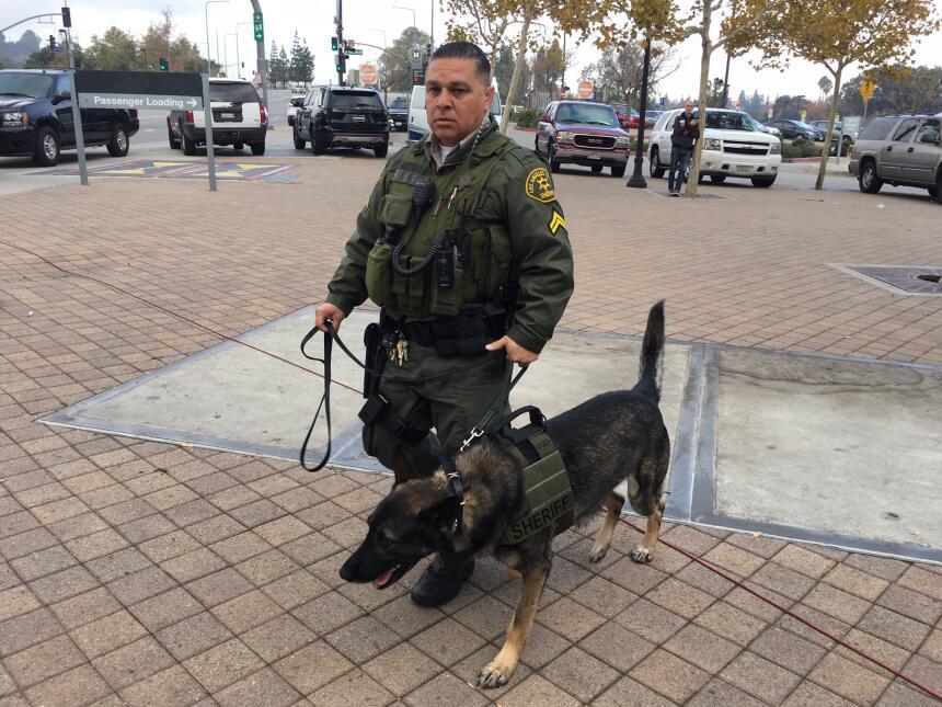 Perros policía fueron parte del operativo de seguridad que se implementó...