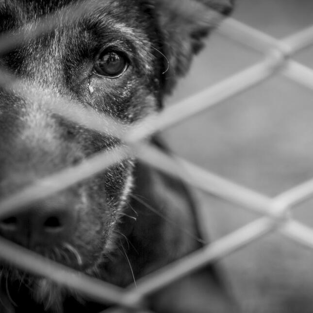 Página engaña para concientizar sobre el maltrato animal