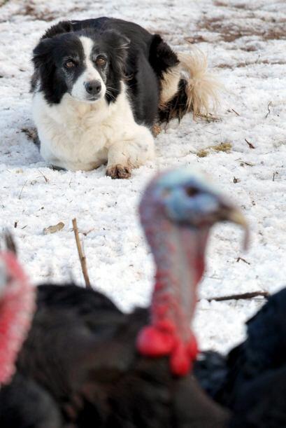 Sus dueños aseguran que ha mantenido a todas las aves en línea.