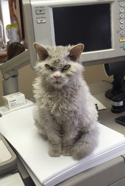 El gatito está acostumbrado al sol y la buena vida de Sagebrush Fine Art...