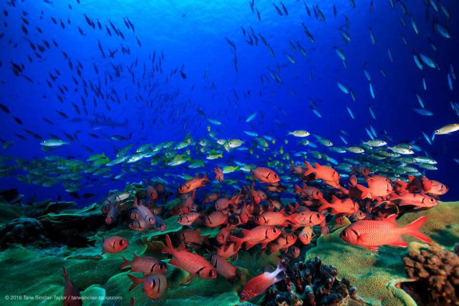 The number and type of fish found on a reef are an indicator of coral he...