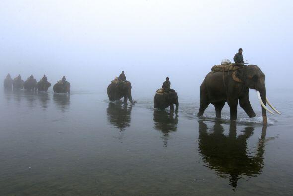 El polo de elefantes comenzó a jugarse a principios del siglo pasado en...