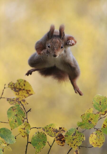 ... y crear conciencia por la protección de la vida salvaje.