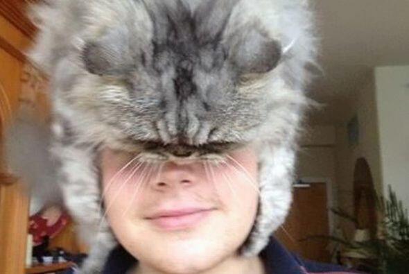 Los gatos como sombrero son la nueva tendencia.