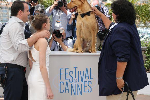El film tuvo todos los perros que necesitaba y los canes obtuvieron desp...