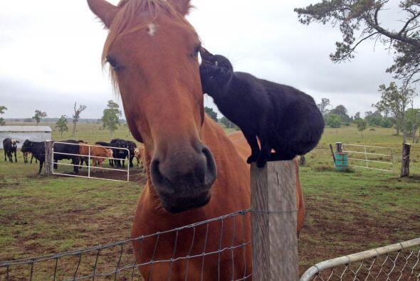 Los mimos no se hacen esperar, Morris es muy cariñoso con su amigo.