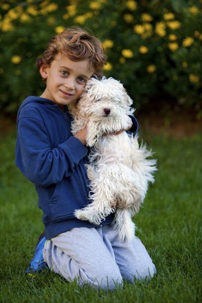 Le encanta recibir cariño y es muy apegado a sus dueños, y se caracteriz...
