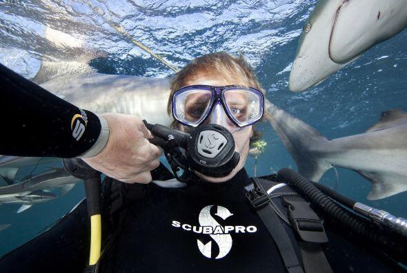 Aaron tomó todas estas fotografías en la migración de sardinas que ocurr...
