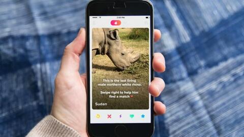 Un rinoceronte recurre a 'Tinder' para salvar su especie