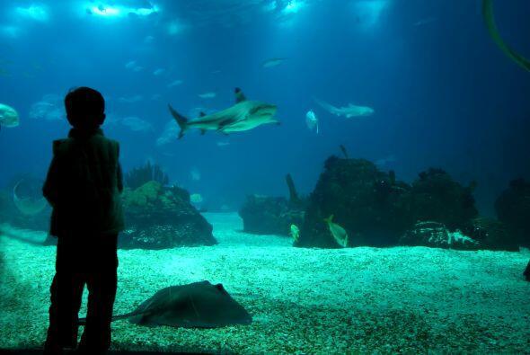Visiten un zoológico a la luz de la luna. Algunos lugares proponen plane...