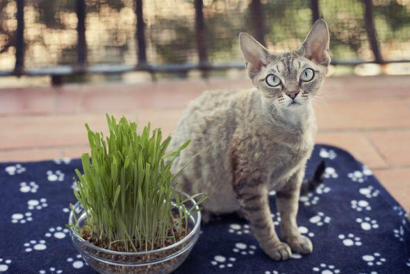 Únicamente si el gato está enfermo la embarazada no puede tener contacto...