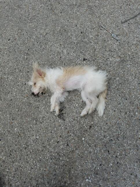 Una perrita se recupera tras haber sido aventada del tercer piso de un e...