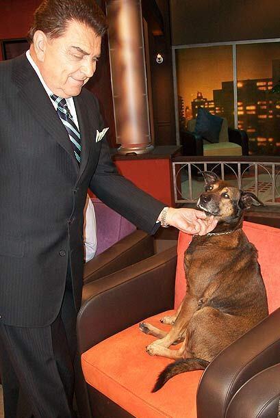 El Don es un amigo de los 'canes'  y no perdió la oportunidad de saludar...