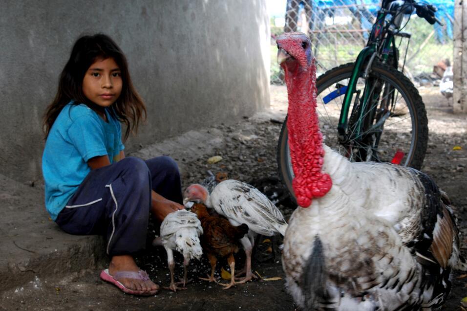 Los llamados niños jornaleros crecen y juegan en los campos donde sus pa...