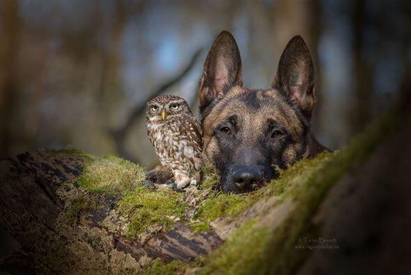 La amistad que tienen estos animales es muy adorable.