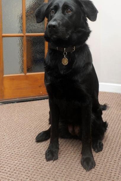 Sin embargo, ninguna lección le enseñó a este intrépido canino cómo salv...