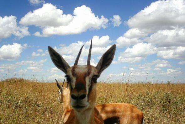 El Parque Nacional Serengueti en Tanzania es patrimonio de la humanidad...