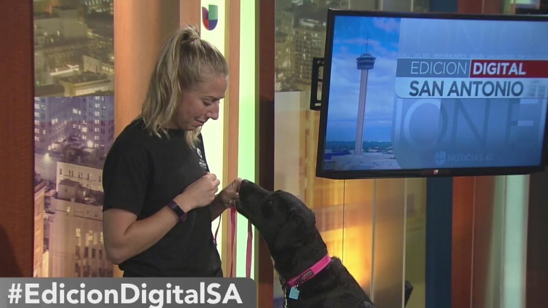 ¿Qué debes vigilar del microchip de tu mascota?