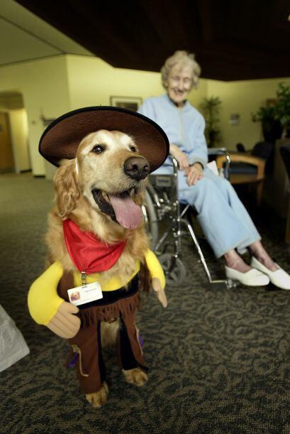 Seguridad  de las mascotas. Las mascotas, sobre todo los perros, podrían...