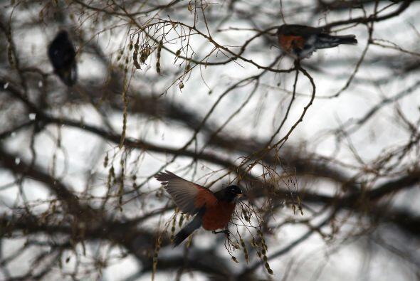 Las aves en los parques de Nueva York también sufren los efectos...