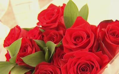 Así se procesan las flores antes de ser comercializadas en el Día de San...