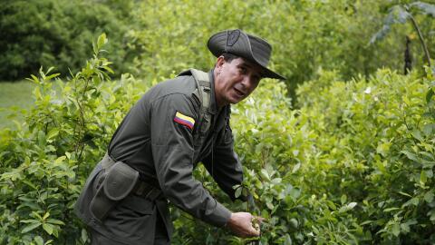 Un policía en un cultivo de coca en San Luis, Colombia.