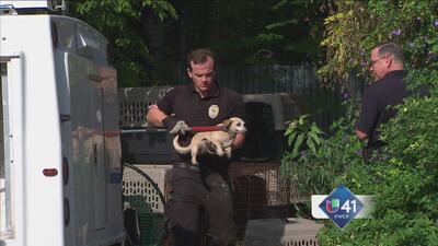 Decomisan más de 200 animales en casa de SA