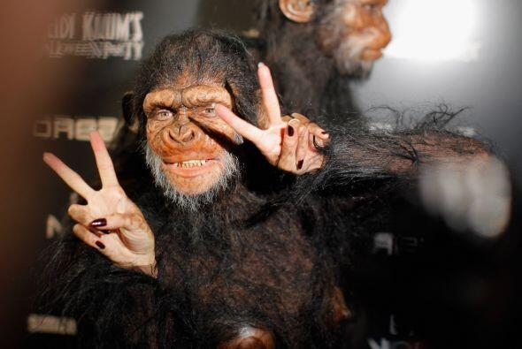 ¡Un mono!