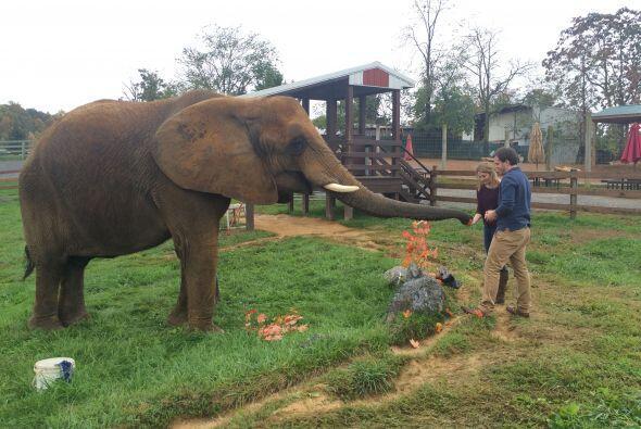 Katie Boling adora a los elefantes, es por eso que Ian pensó en sorprend...