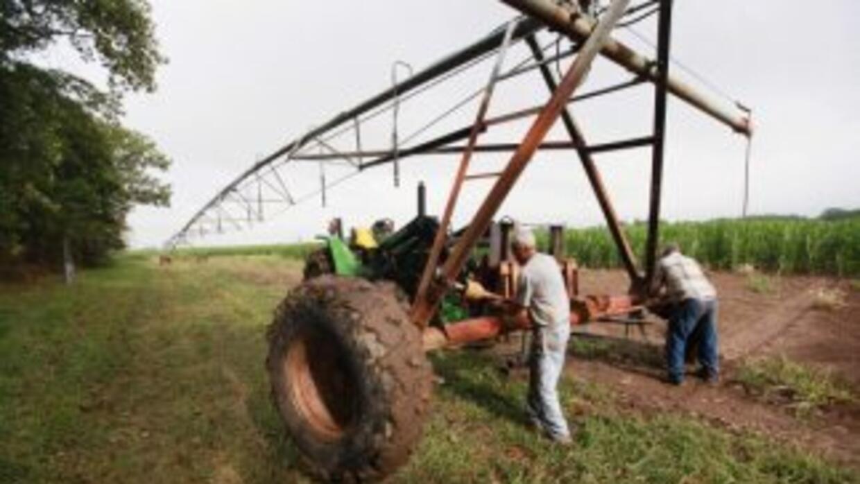 Una intensa sequía afecta al campo salvadoreño.