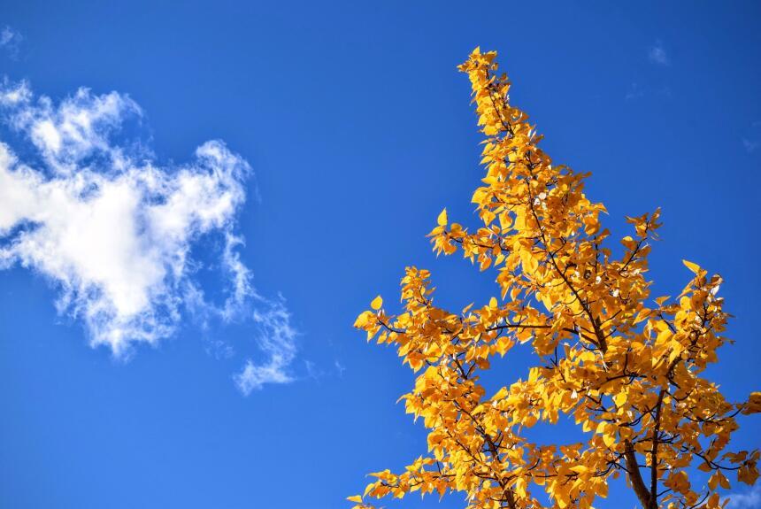 Cuando la mejor terapia es un paseo entre los árboles  tim-gouw-38263-1.jpg