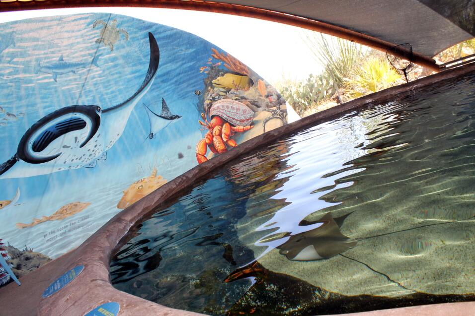 El Museo del Desierto Arizona - Sonora