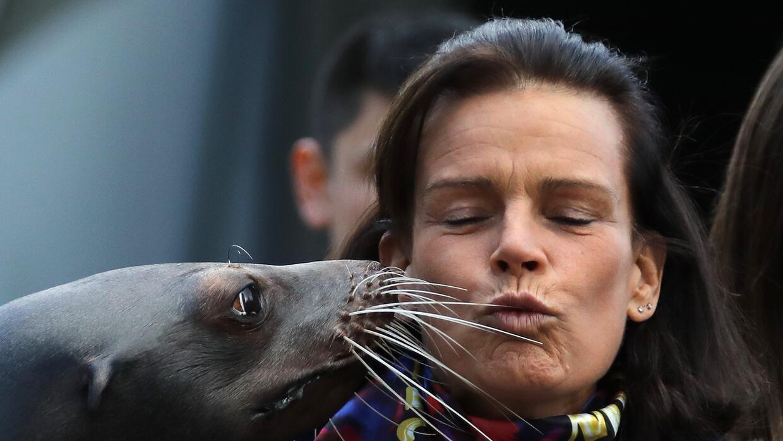 Con un besito de león marino amaneció este martes la princ...