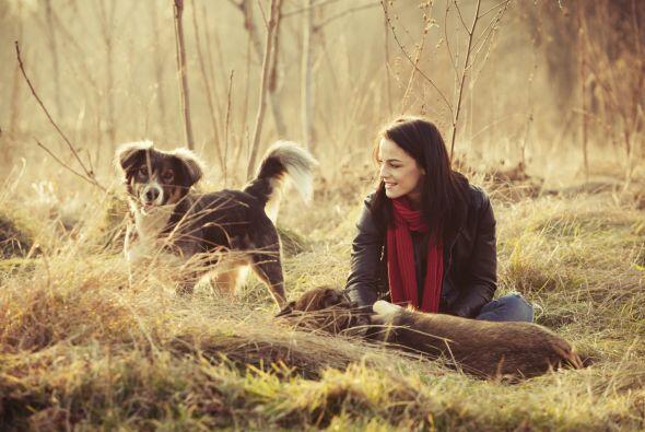 Socialización. Cualquier mascota necesita de un humano para sentirse ama...