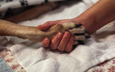 Linfoma, el tipo de cáncer más común en los perros
