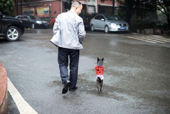 Como si se tratara de una pequeña, muy pequeña personita, va caminando a...